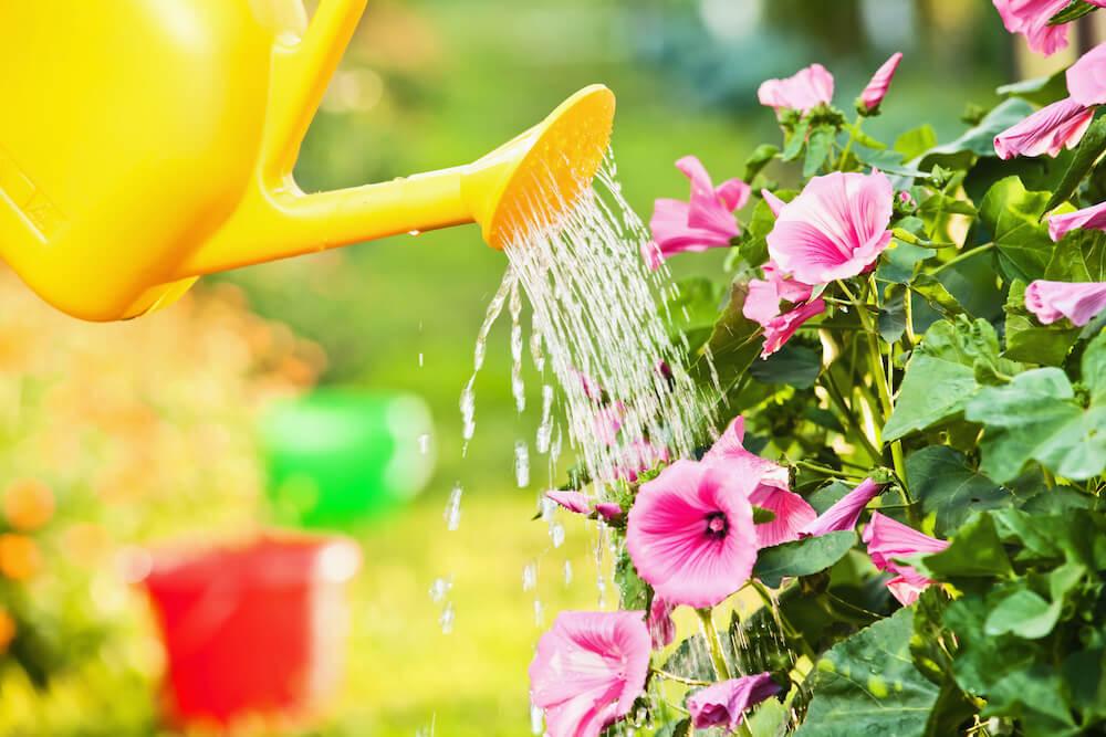 Blumen für den Garten in der Gartenwelt Oppl